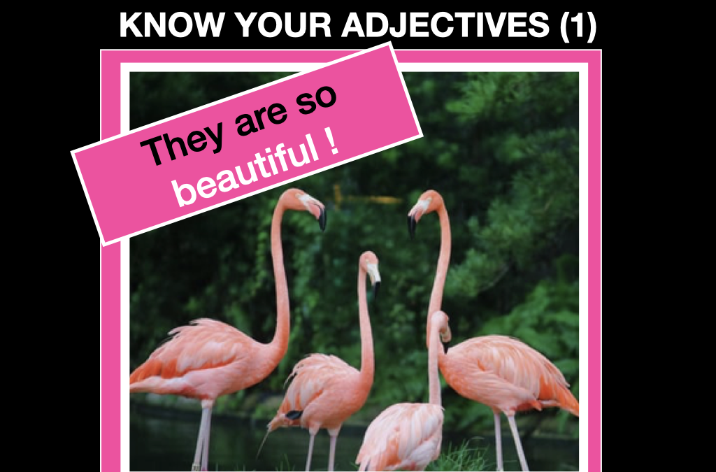 Know your adjectives (i)